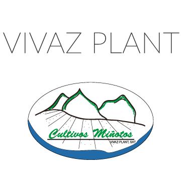 Vivaz Plant